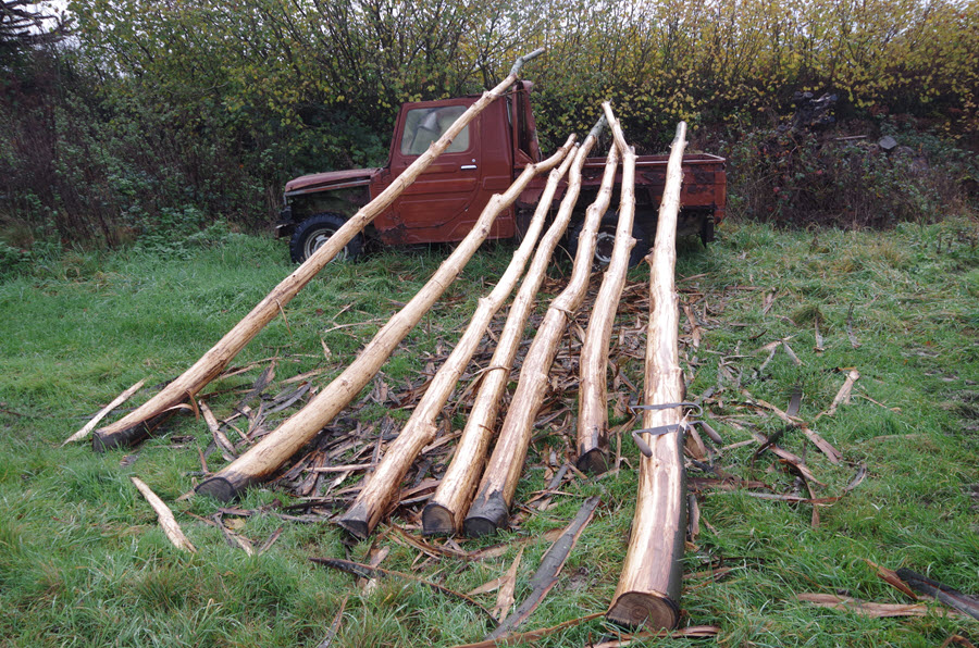 Coppiced Chestnut for Replacement Hop Poles