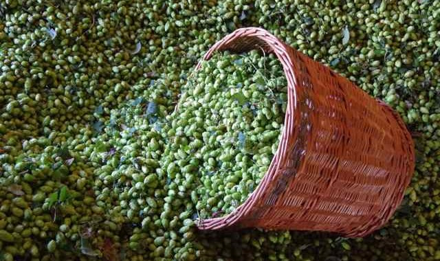 bushel of hops