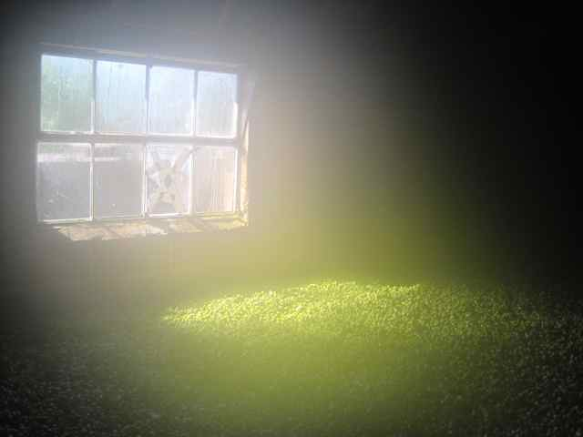 reek (moisture) coming off a load of hops. a lot of water vapour has to be removed on a large kiln load of hops jpg