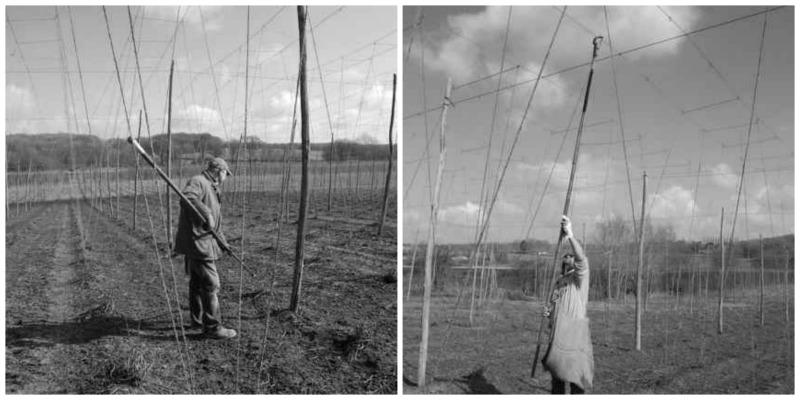 target hops being strung