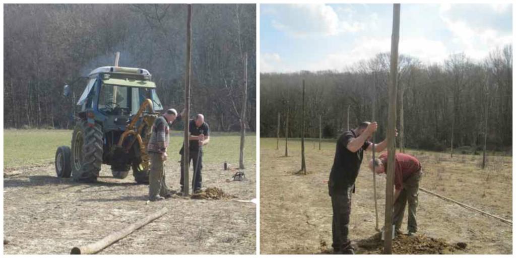 hop viniculture, putting up a hop garden, hop growing