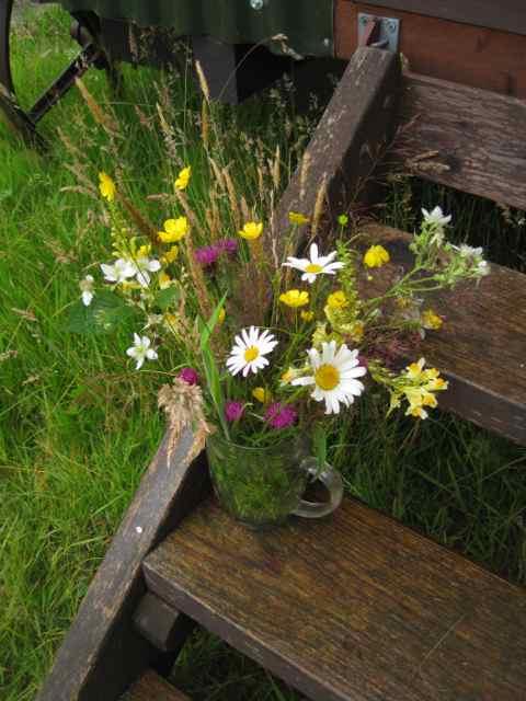 wild flower meadows, wild flowers