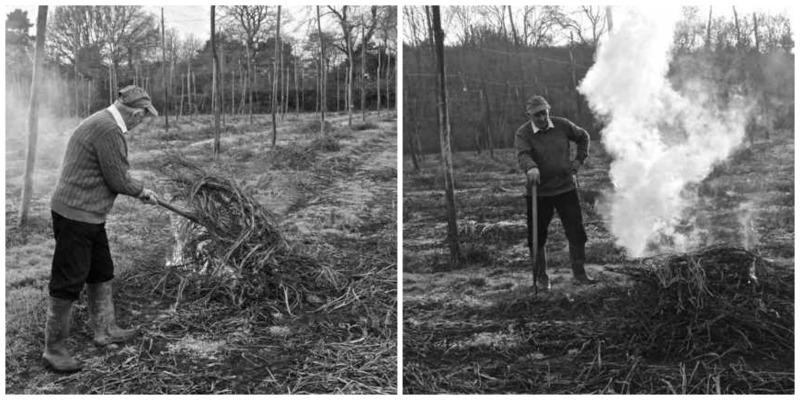 autumn in the hop garden, bine cutting is underway by burning bines