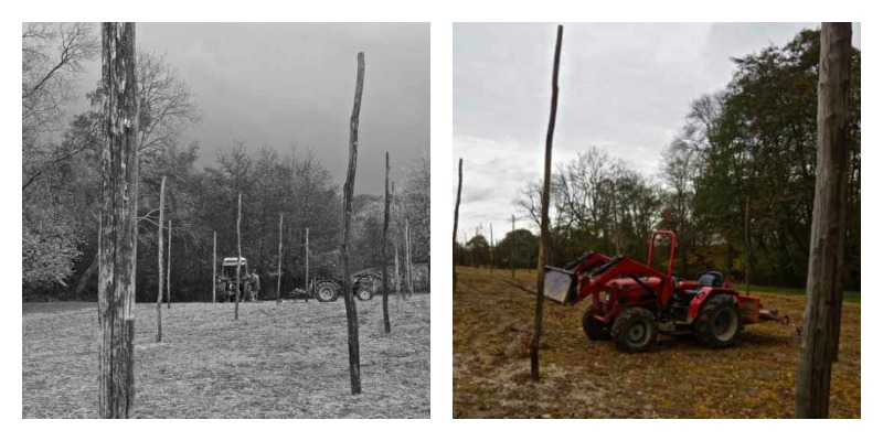 hop poles, new hop garden