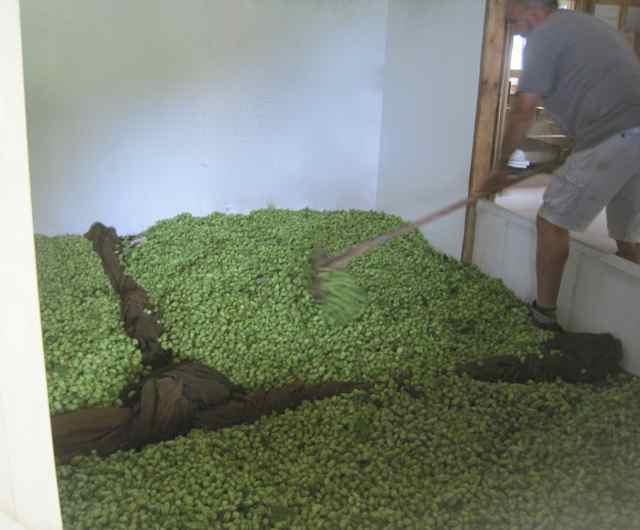 2017 hop ready for brewing