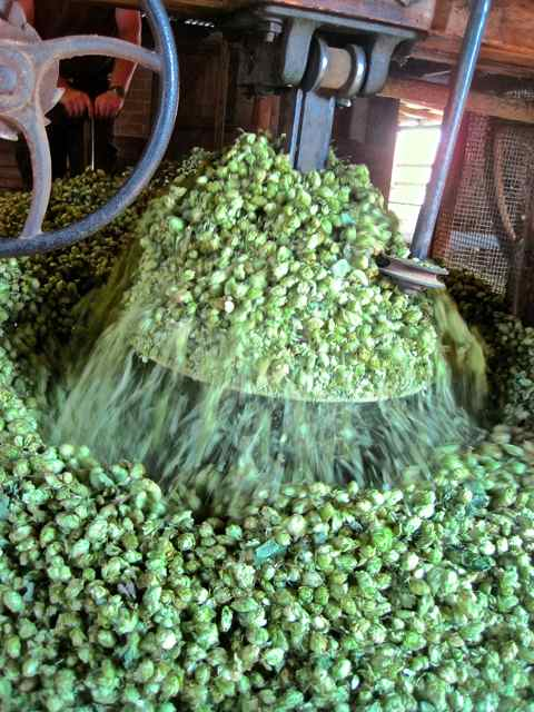 old english blend of hops