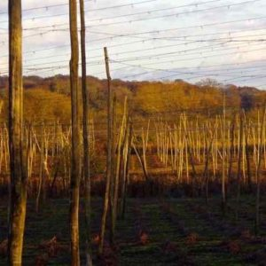 hop garden as a faraday cage