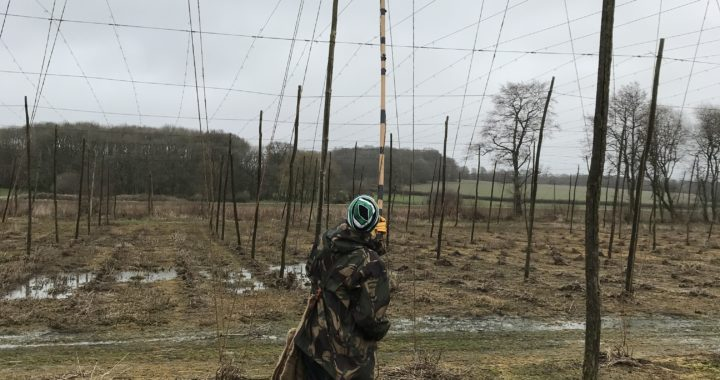 learning to string a hop garden